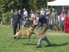 addestramento-cani-open-day-2012-53