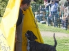 addestramento-cani-open-day-2012-59