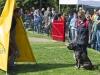 addestramento-cani-open-day-2012-61